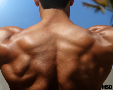 Back Muscle Building Exercise